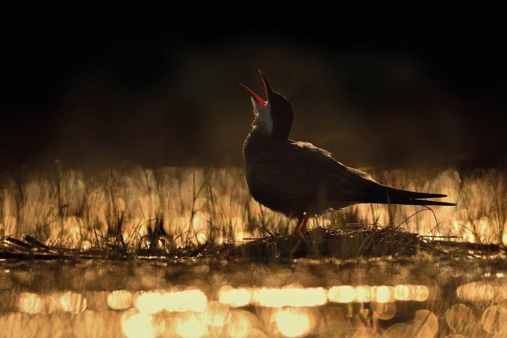 10. Зимородок играется с пойманной рыбкой , Саффолк, Великобритания. (Фото Vince Burton | 2017 Bird