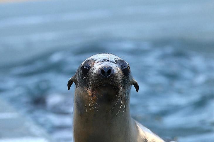 1. Точная причина этого явления не ясна, ученые предполагают, что морские львы страдают от не