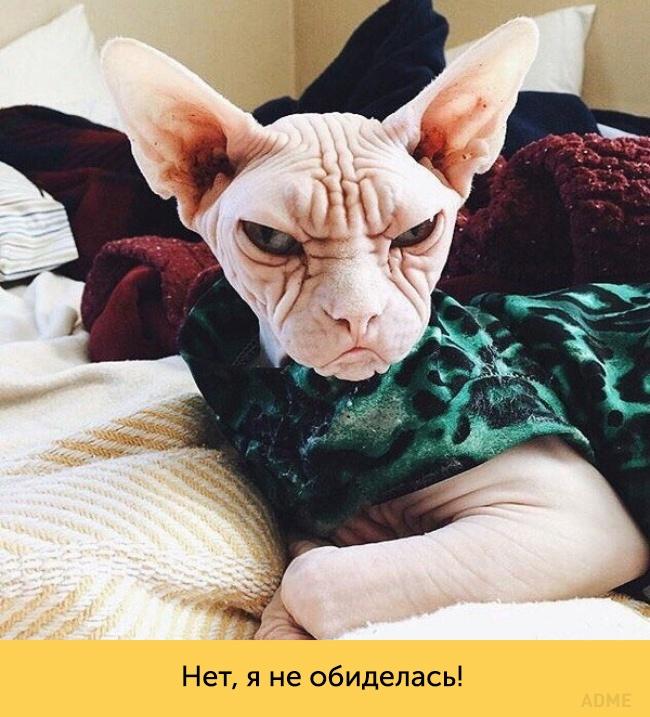 Эти кошки— настоящие королевы драмы