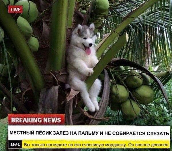 Доброжелательные новости, о которых рассказали нам животные