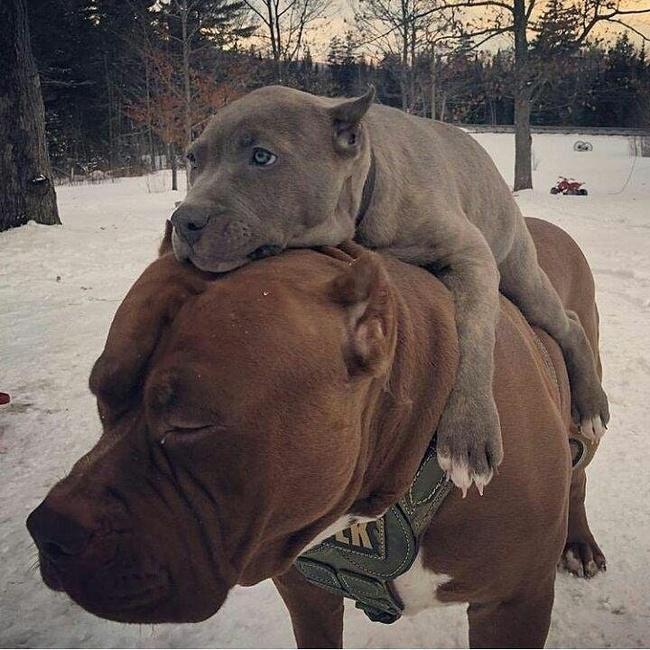 животные собаки Фотография подборка их нравы фотограф рассказ Интернет