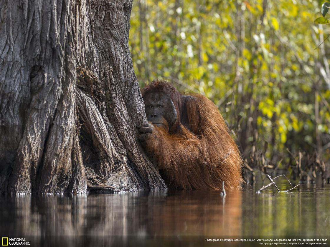 © JAYAPRAKASH JOGHEE BOJAN / National Geographic Your Shot