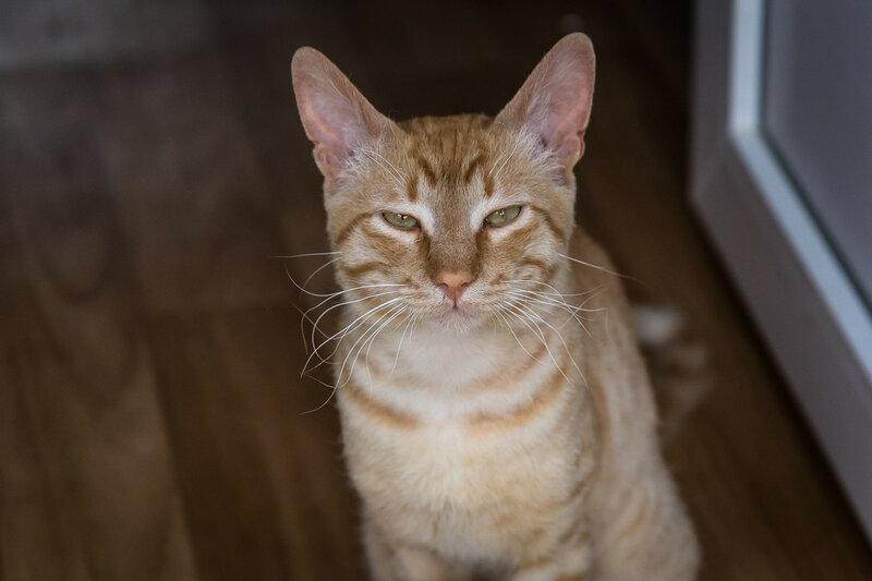 Суровый кот Митрич