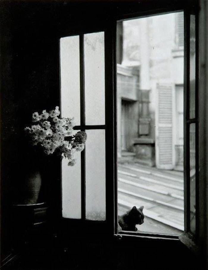 1957. Кошка за окном, Горд