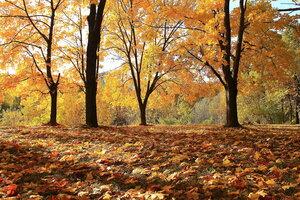 Волшебные минуты октября