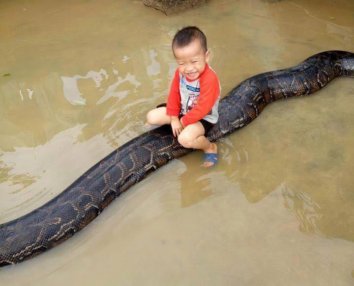 3-летний мальчик улыбается сидя на 6-метровом питоне