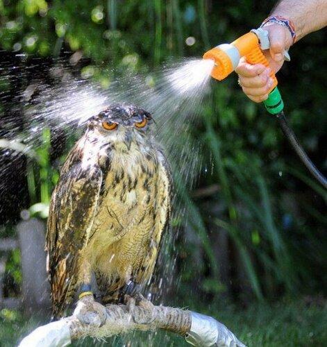 owls05.jpg