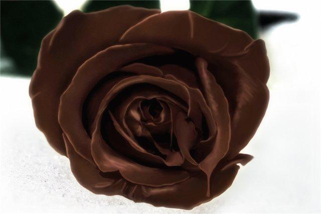Всемирный день шоколада 11 июля. Роскошная шоколадная роза