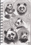 panda-sketches.jpg