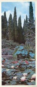 Крым. Ялта. Никитский ботанический сад. В бассейне Верхнего парка цветёт нимфея. Фото Б. Семенова.jpg