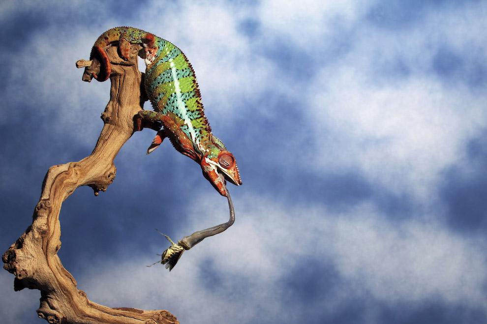 31. Иерархия. Совы из Кирьят-Гата, Израиль. (Фото ILIA SHALAMAEV):