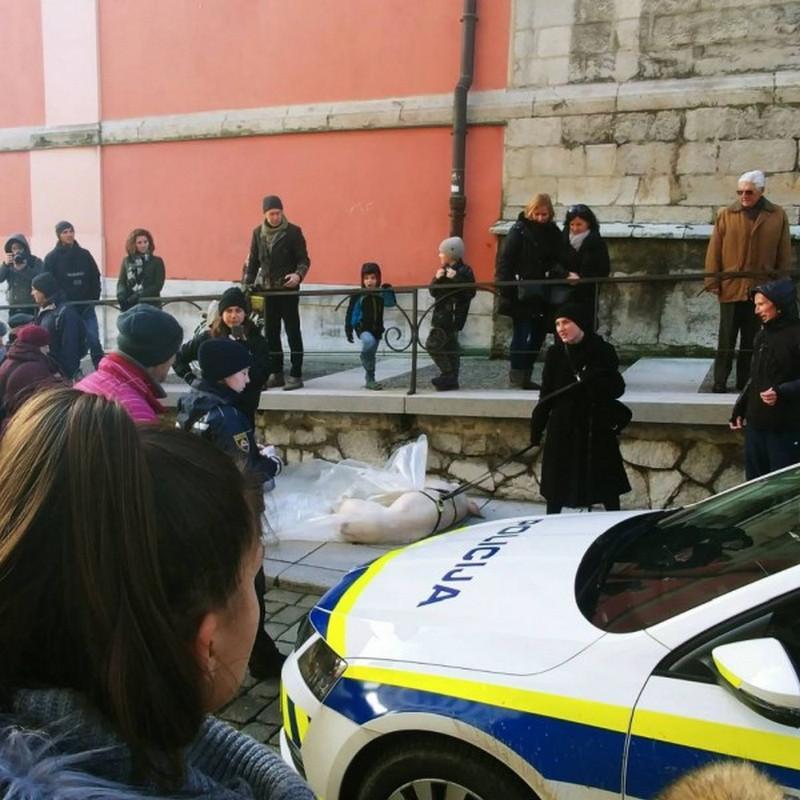 Веганка протащила по улице тушу свиньи в знак протеста (3 фото)