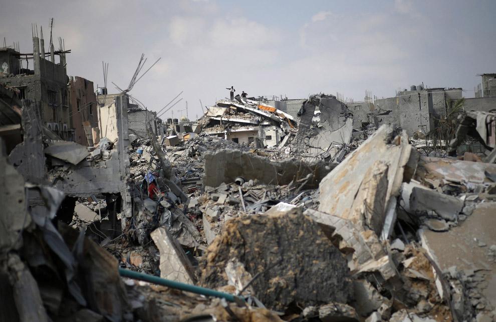 21. Ослик внутри разрушенного магазина, 5 августа 2014. (Фото Mahmud Hams | AFP | Getty Images):