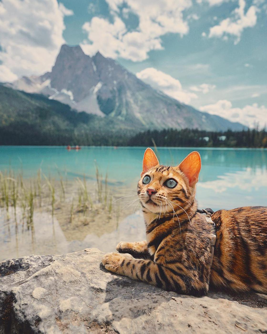 Suki The Cat – The adventures of a beautiful cat across wild Canada