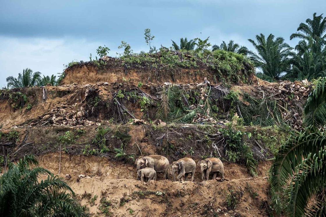 © Aaron Gekoski - Wildlife Photographer of the Year