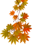 Autumn Gold #10 (31).png
