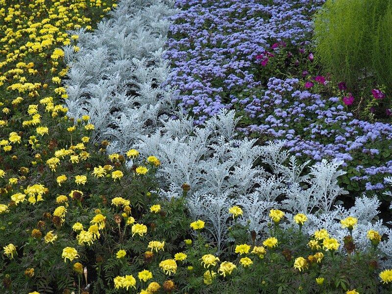 Новосибирск, Академгородок – цветы (Novosibirsk, Akademgorodok – flowers)