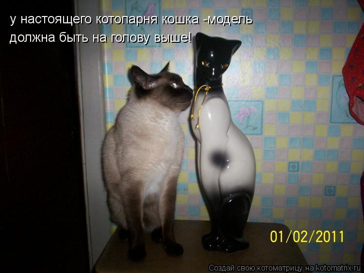 kotomatritsa_N8.jpg