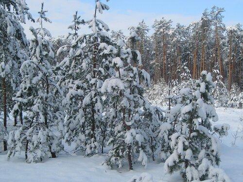 Лесная снежная сказка