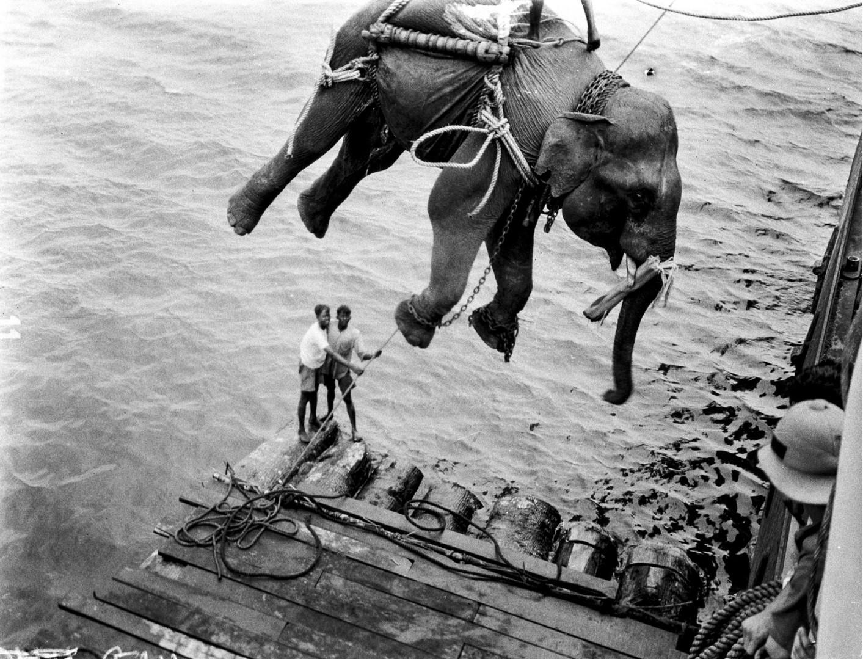 1117. Погрузка слонов