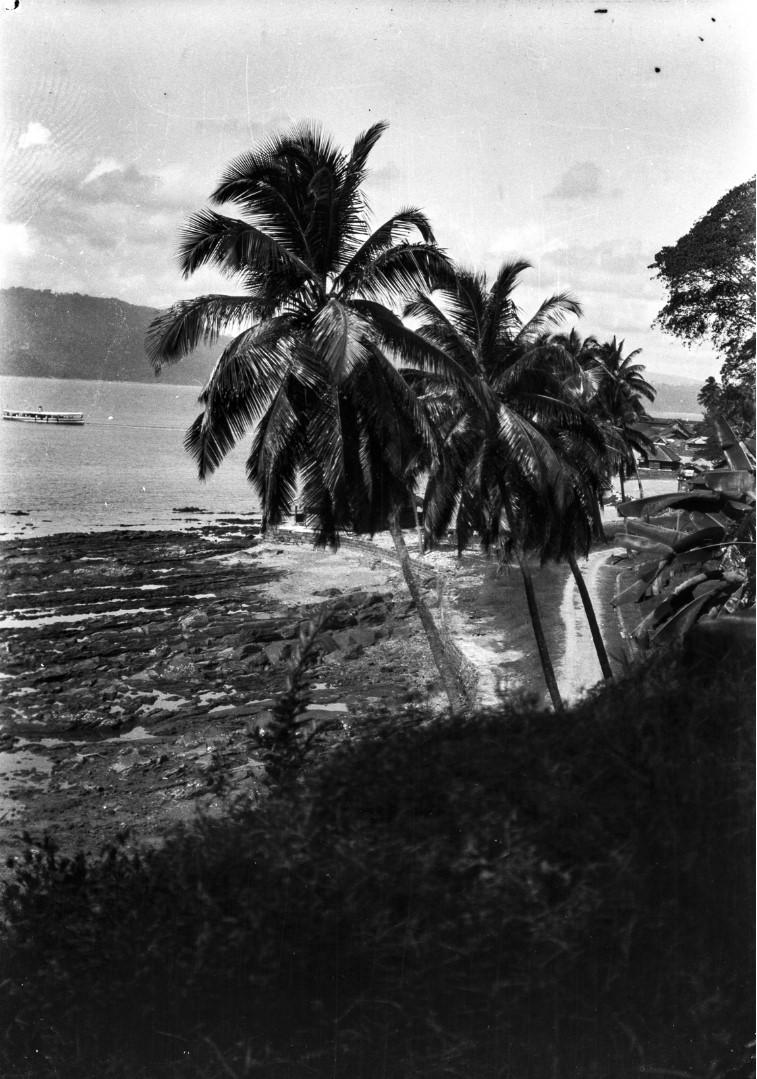 1125. Две пальмы на берегу в Порт-Блэр