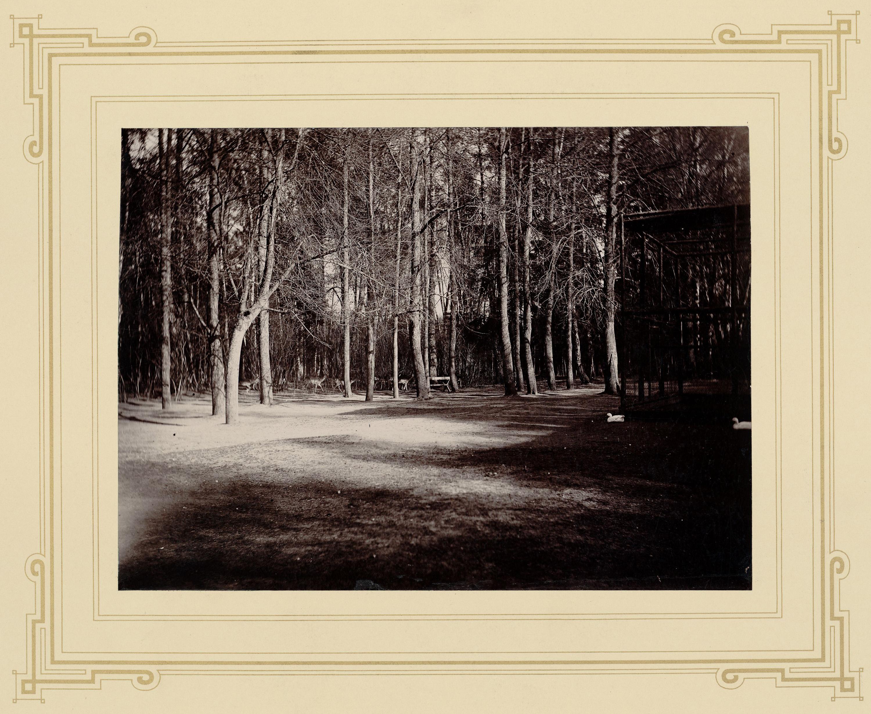 Территория ламника в Архангельском. На заднем плане, среди деревьев, пятнистые олени, лоси, ламы