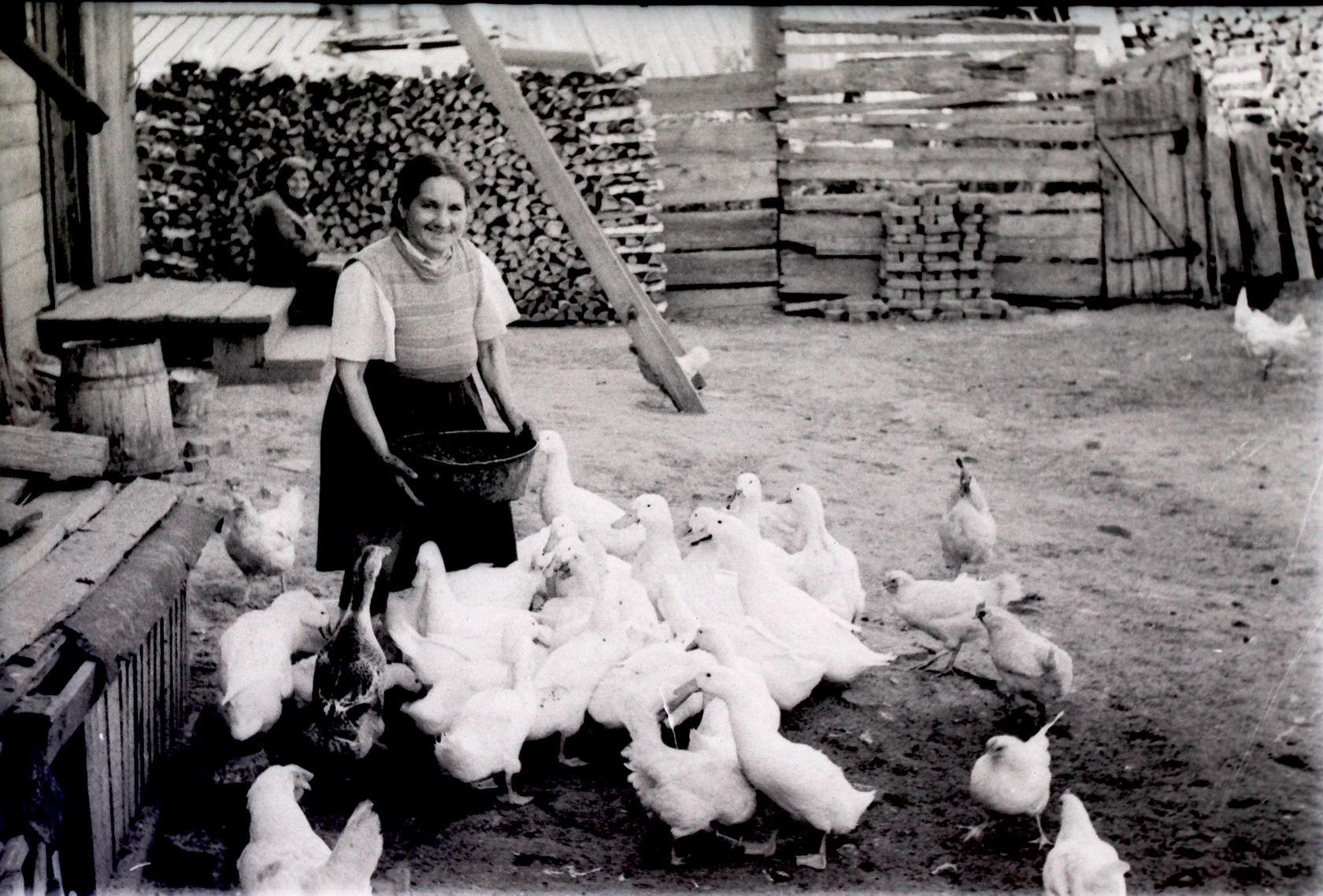 1955. Кормление домашней птицы