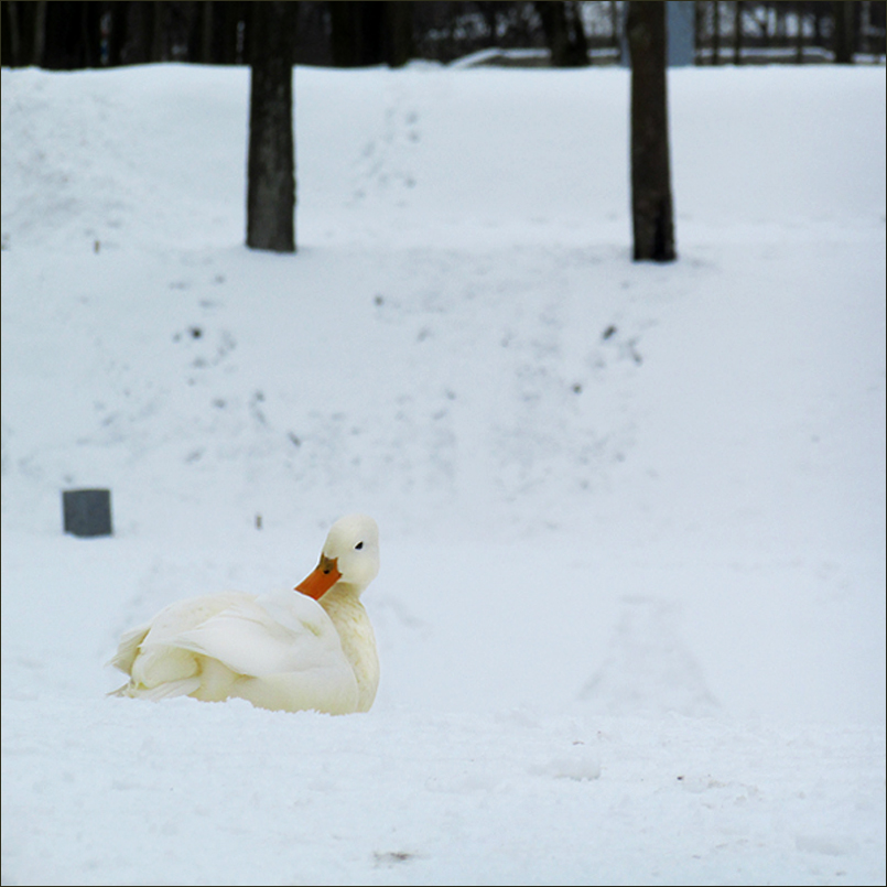 альбинос .jpg