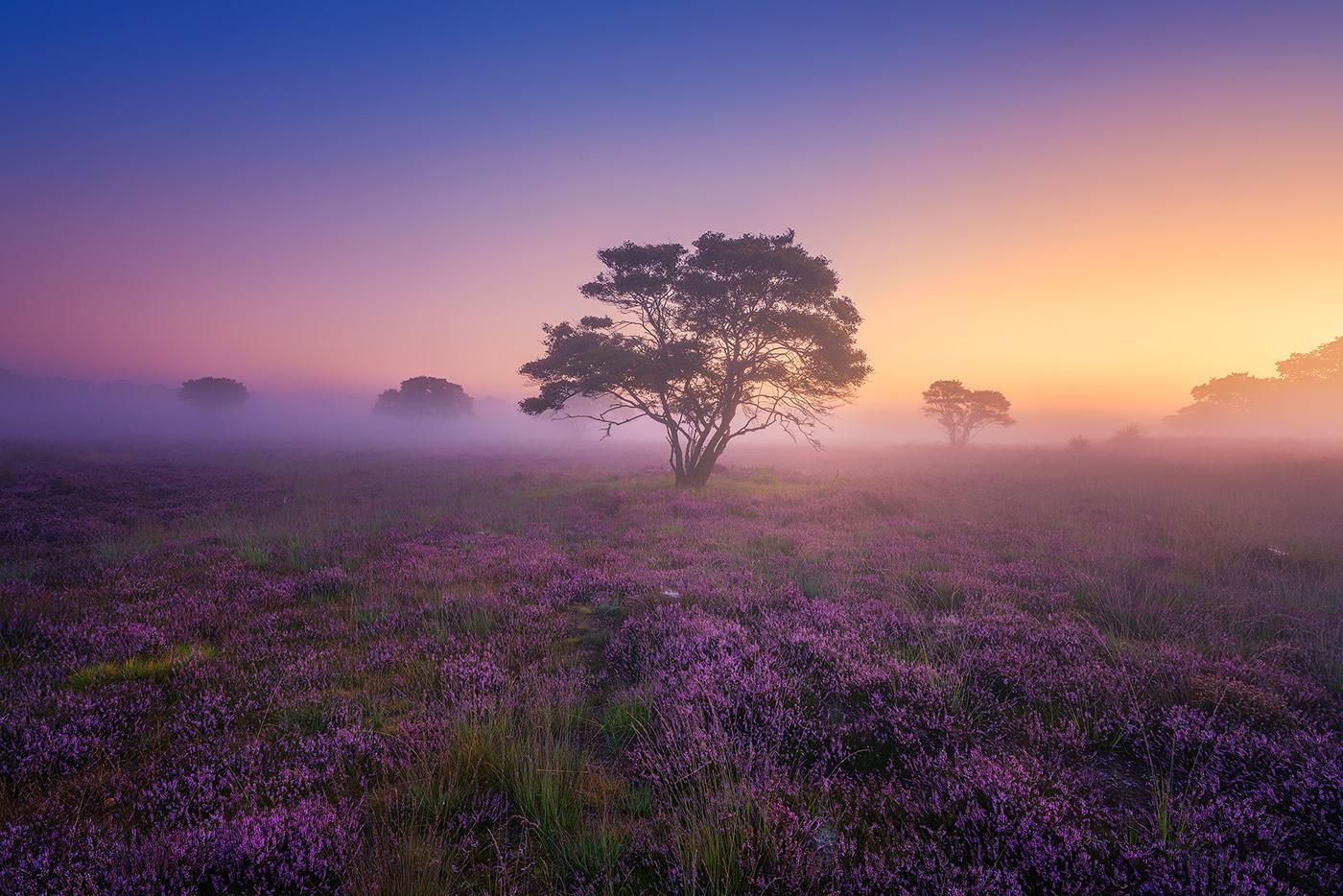 A Purple Dream / фото Albert Dros