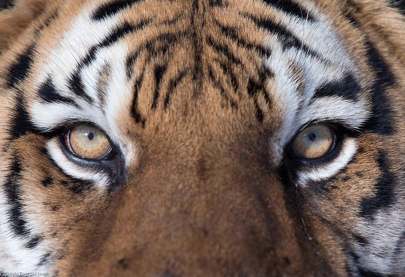0 180280 732d4960 orig - Портреты диких животных
