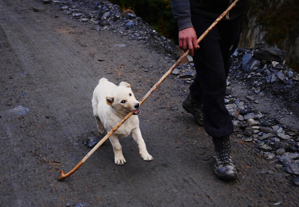 4. Овцы и Гергик уверенно переходят один из потоков. (Фото Amos Chapple | Radio Free Europe | Radio