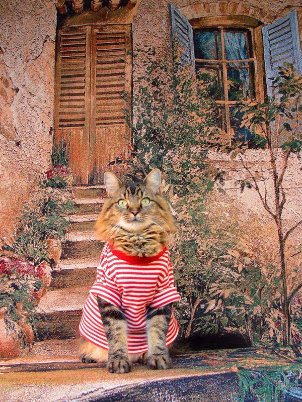 Кот Лоренцо, который благодаря своей хозяйке Джоан Бионди прославился в сети своими забавными фотографиями в различных нарядах (10 фото)