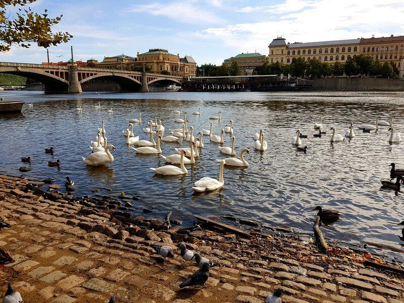 Прага@Люсик.нет - Страница 3 0_b492c_ae886759_XL