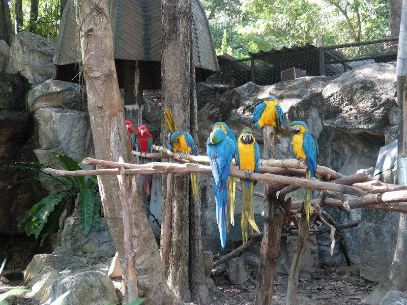 Чиангмай - Зоопарк - Пестрая компания