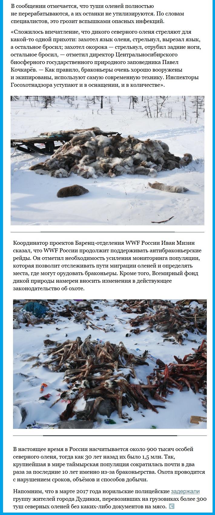 Уничтожение браконьерами северных оленей(2)