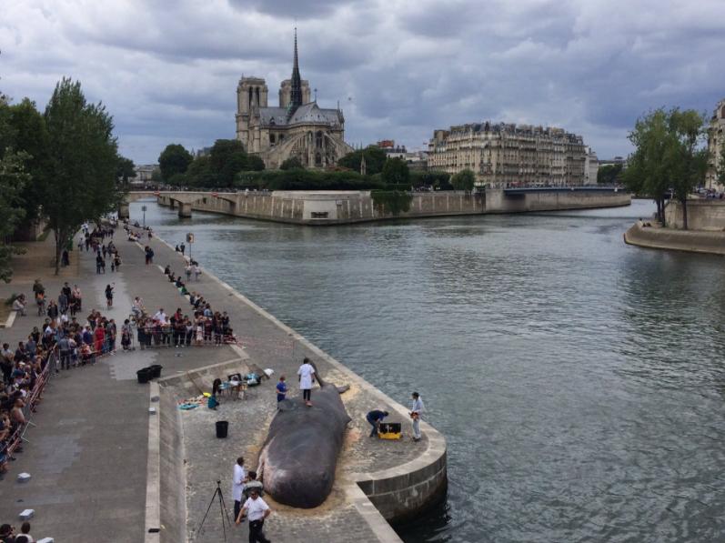 Жители Парижа нашли на набережной Сены «выбросившегося кита»