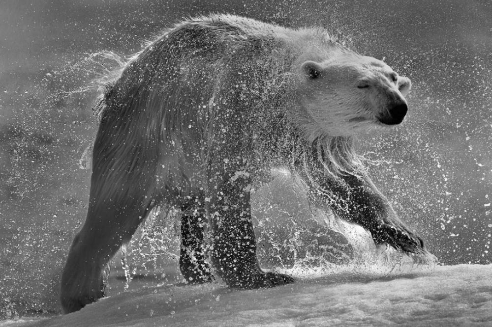 © Sergey Anisimov  Любовь...