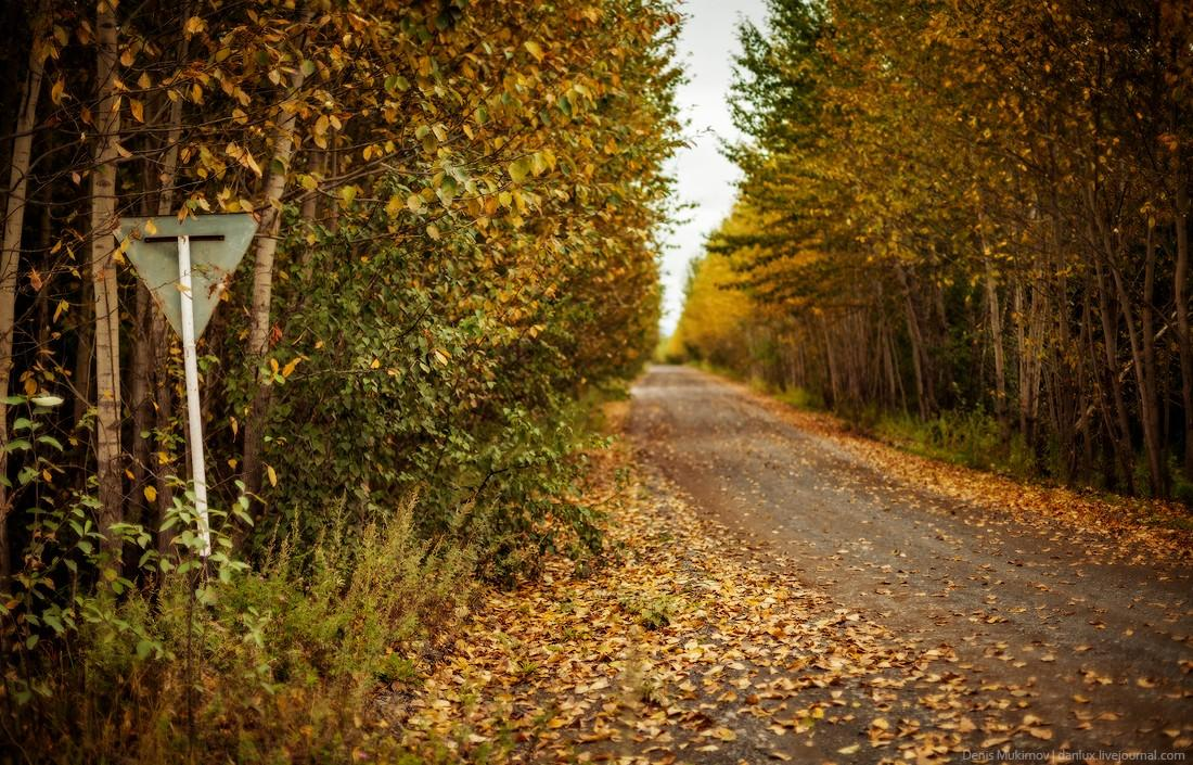 5. Дорога в деревню Долиновка. Из-за высокой влажности на Камчатке очень густые леса, но почти все о