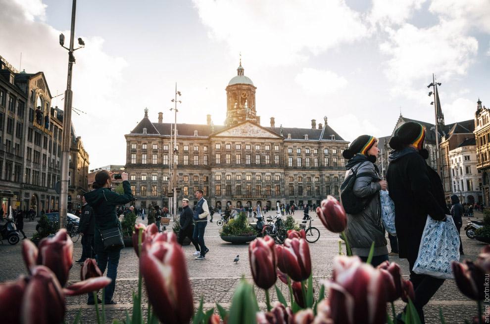 Факты про Амстердам