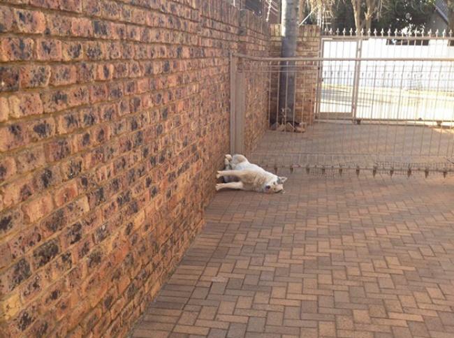 © reddit  Язнал, что кошки умеют держать равновесие, нонедумал, что настолько