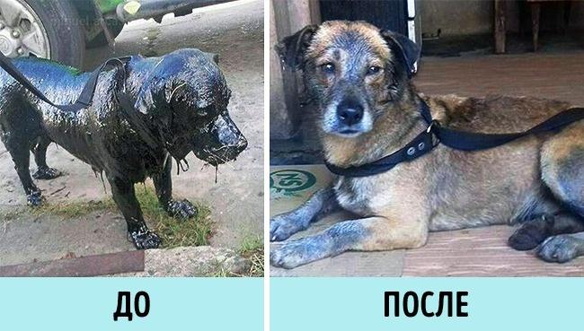 © Myriam Ortellado / facebook  В Аргентине 2молодых человека обратили внимание напса, котор