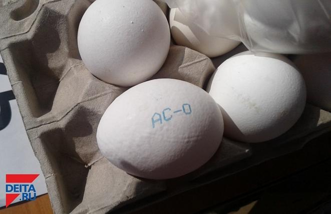 Наюге Аргентины пастух отыскал яйца динозавров