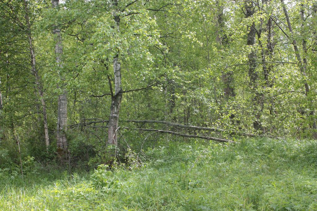 Лес-32.jpg