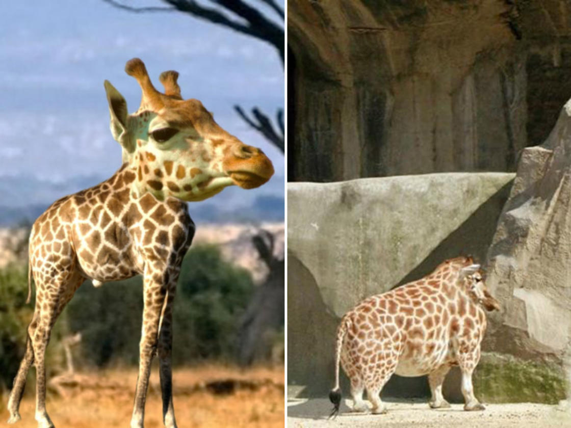 Removing the neck of animals is both strange and hilarious
