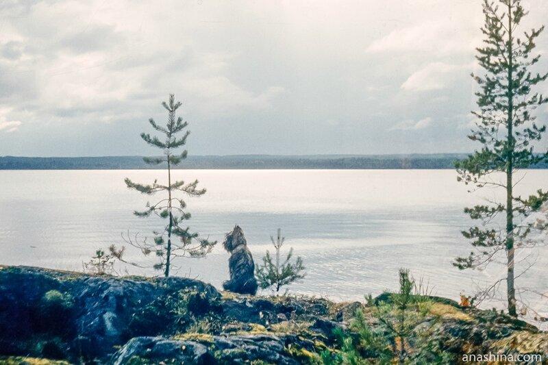 Лижемская губа, Онежское озеро
