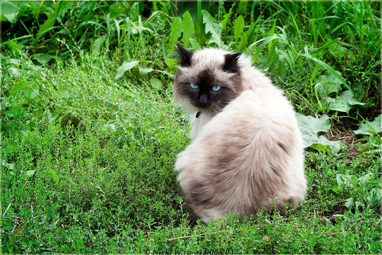 Деревенский кот [© NickFW - 13.08.2017]