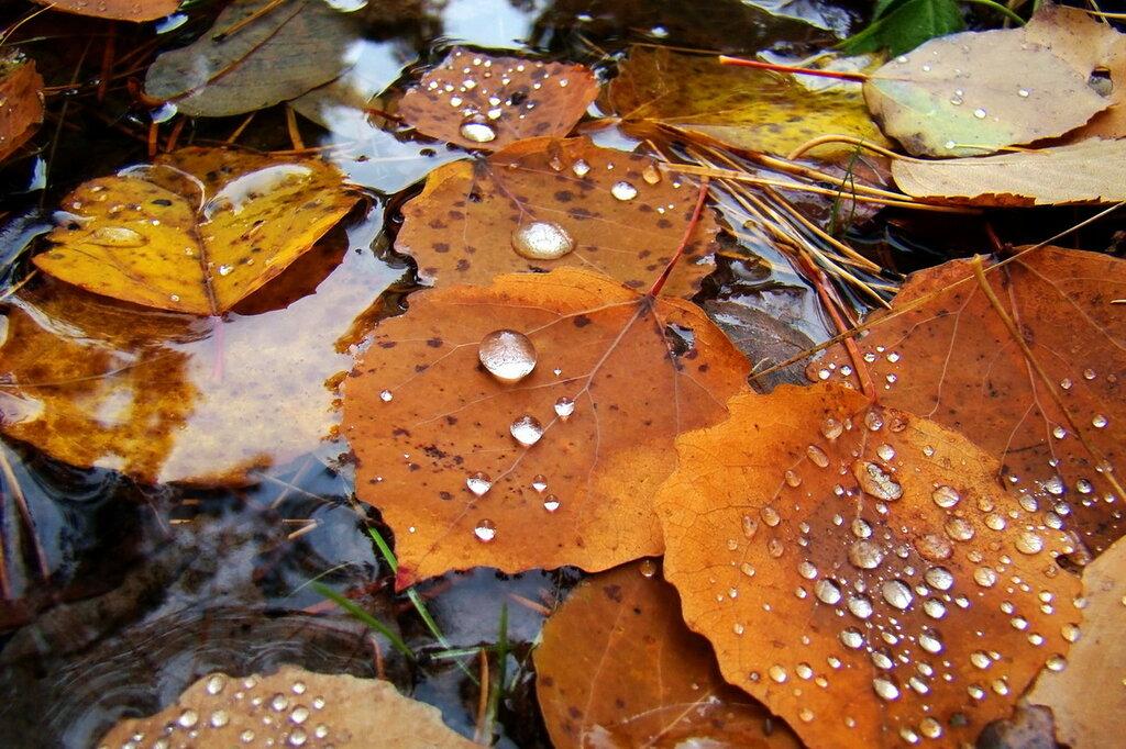 Осенний жемчуг