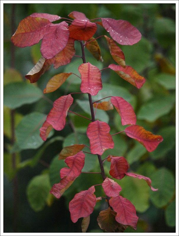 157_Leaf.jpg