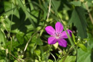 Цветок и его тень