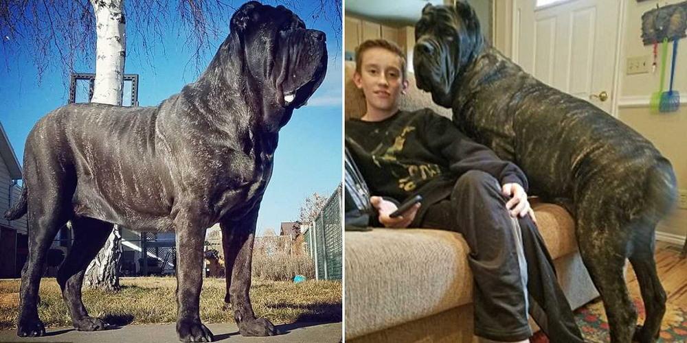 Евфрат — самый большой щенок в мире